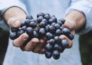 черный виноград, вино, красное вино, грузия
