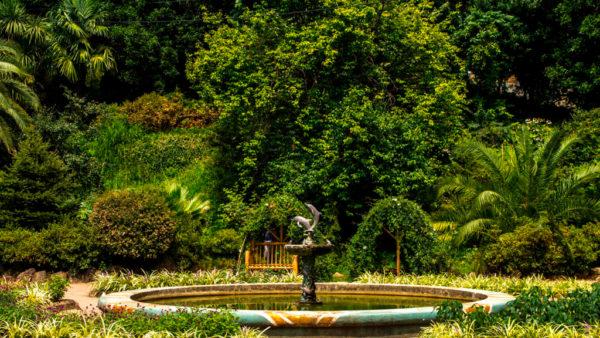 Batumi-botanicheskiy-sad3